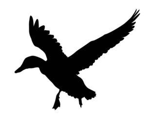 quack twack tweet twitter twitter spamming
