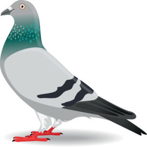 Pigeon algorithm