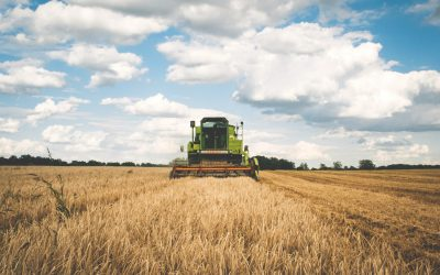 Online or On a Tractor? Digital Marketing for Small Farmers